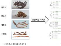 농산물 산조인, 석창포 진위판별 가능해진다.